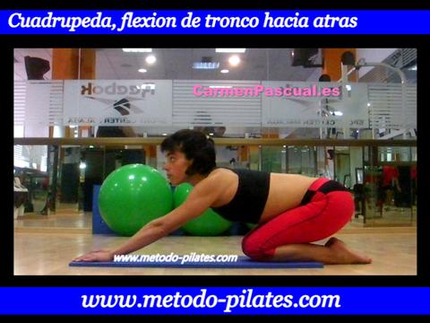 Ejercicio pilates Felibilidad de brazos y piernas desde sentado con movimiento del tronco.