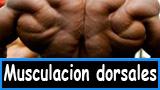 Musculacion o hipertrofia de los dorsales