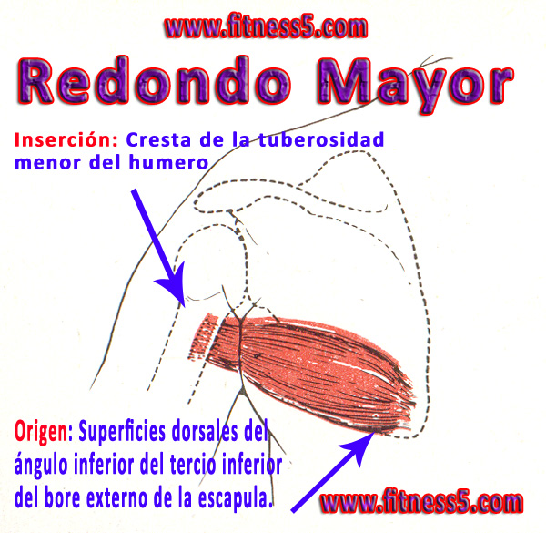 reondo mayor