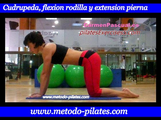 Ejercicio pilates para los muslos y el gluteo, desde cuadrupeda flexion y extension de la pierna